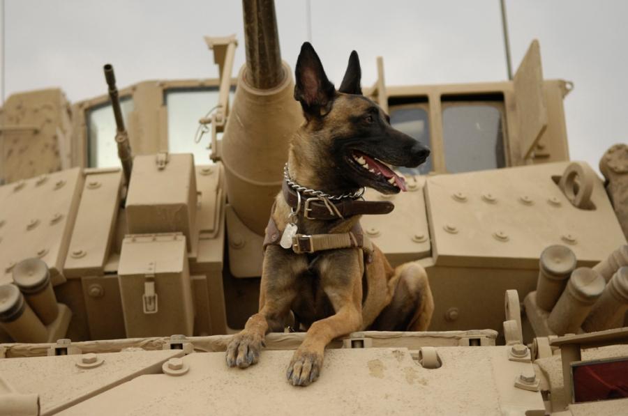 Operation Iraqi Freedom