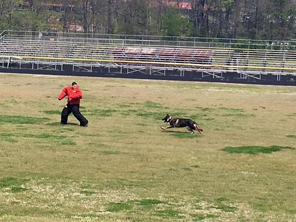 dog-training-2